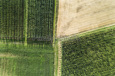 germany bavaria hop fields aerial view