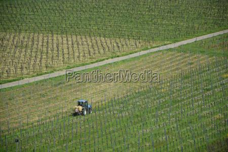 working in a vineyard