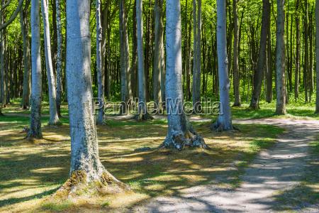 the ghost forest in nienhagen