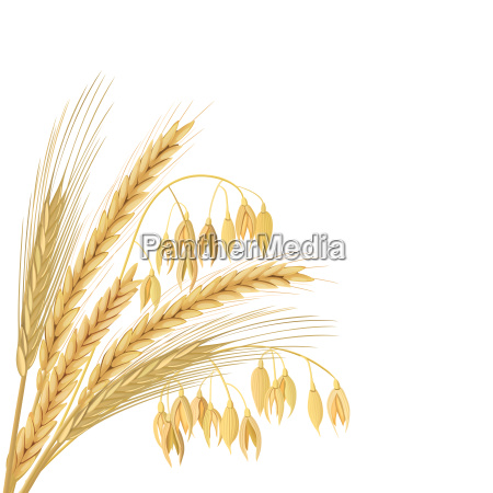four cereals grains with ears sheaf