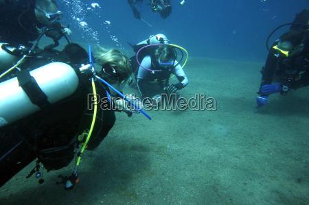 divers observe and photograph a facial