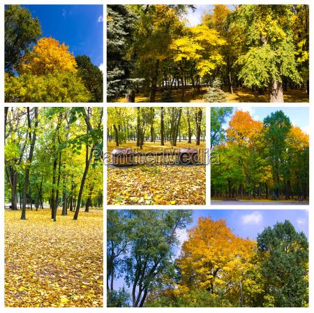 autumn collage collection of autumn