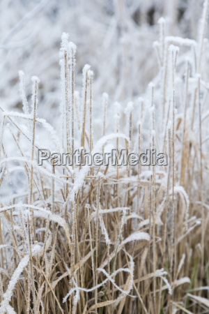 snowflakes and ice crystals on autumn