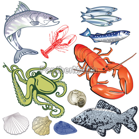 seafoodfishmussels illustration