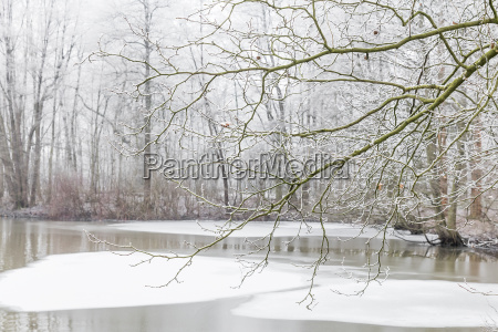 snowy branches over a frozen lake