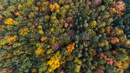 autumn forest with green and yellow