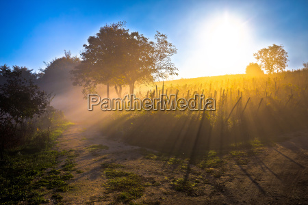 sun rays in morning fog vineyard