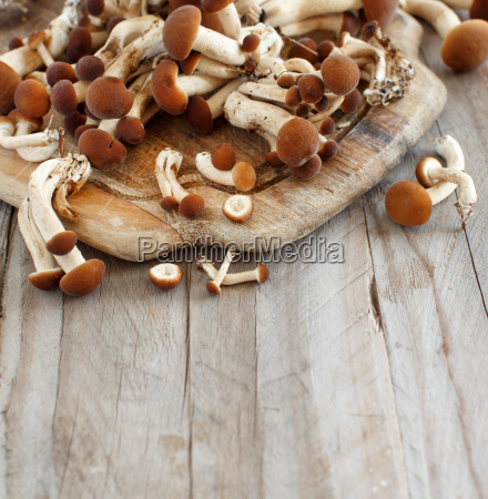 agrocybe aegerita mushrooms pioppino