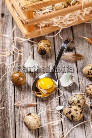 fresh, quail, egg - 23454451
