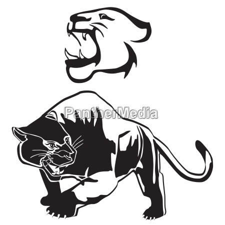 leopardpanther graphicillustration