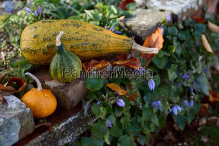 ornamental gourds on a rustic rockery