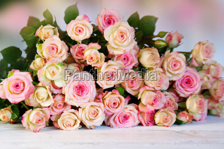many roses for mothers day