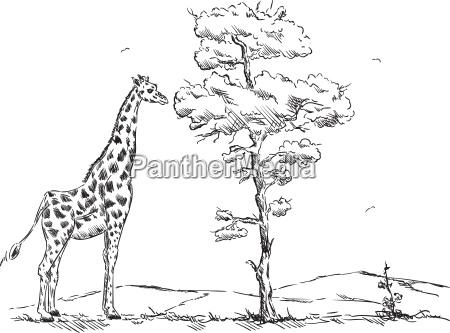 draw animal giraffe