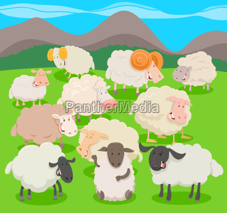 flock of sheep characters cartoon illustration