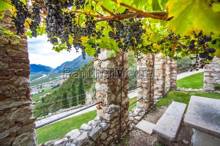 vineyards at castello di avio trento