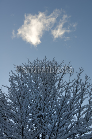 a snowy winter landscape between the