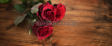 symbolic red roses for valentines day