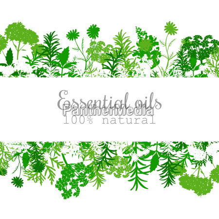 popular essential oil plants label set