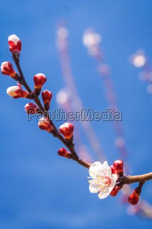 spring flower close up