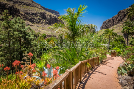 tropical plants garden