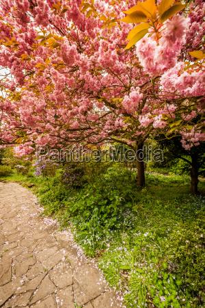 park in spring