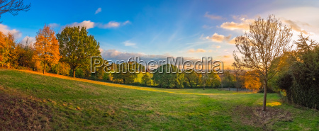 panorama of a park in spring
