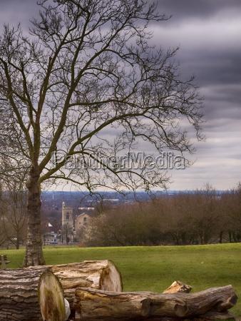 cut tree logs in a park