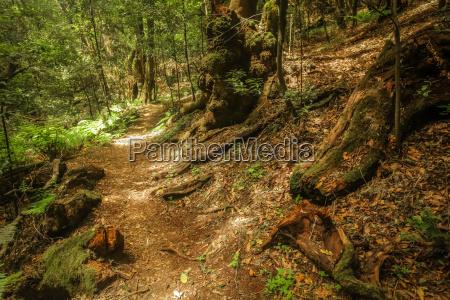 footpath in garajonay national park