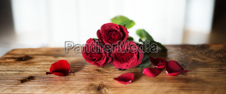 red roses symbolic for valentines day