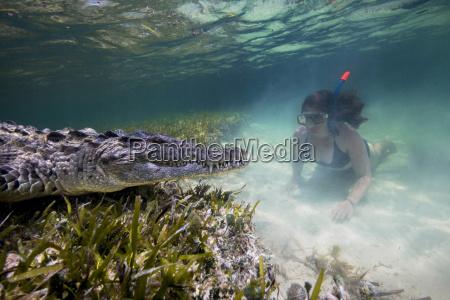 mexico scuba diver watching american crocodile