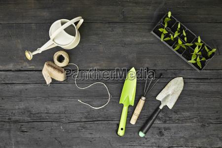 gardening tools and seedlings on dark
