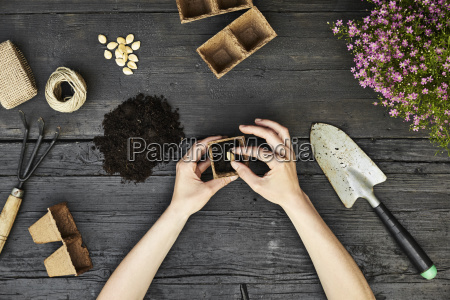 womans hands planting