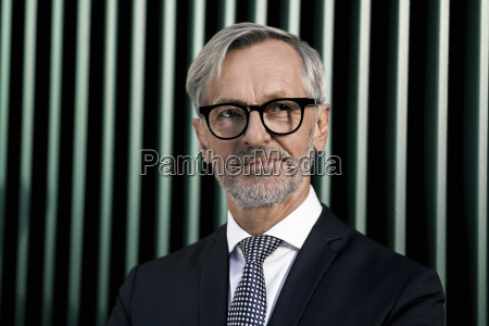 portrait of grey haired businessman in