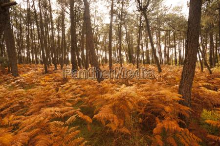 france bretagne autumnal forest