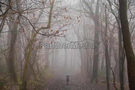 rear view of dog running along