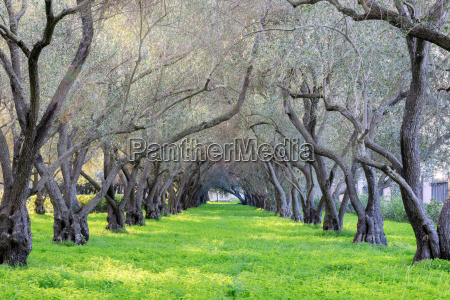 olive grove tranquility carmelite monastery of