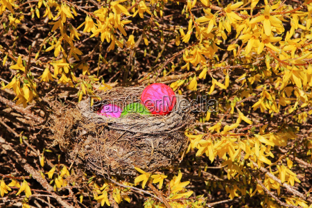 easter nest with colorful easter eggs