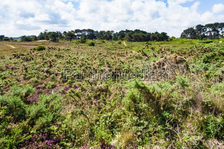 view of natural parkland of ploumanach
