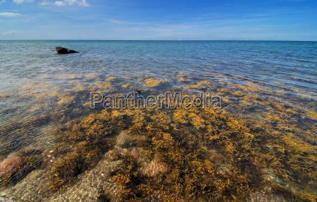 algae on the baltic sea coast