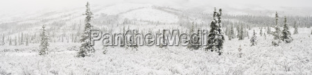 panorama landscape of the first snowfall