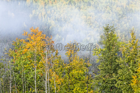 fog lifting over autumn coloured boreal