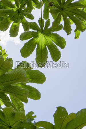 low angle view of leaves against