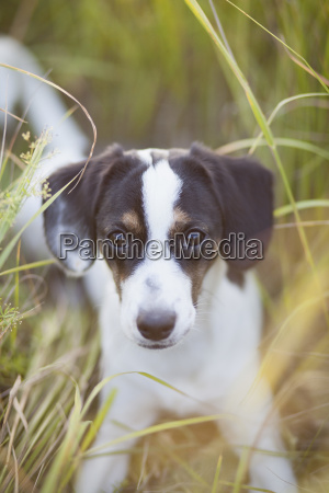 portrait of dog lying on grassy