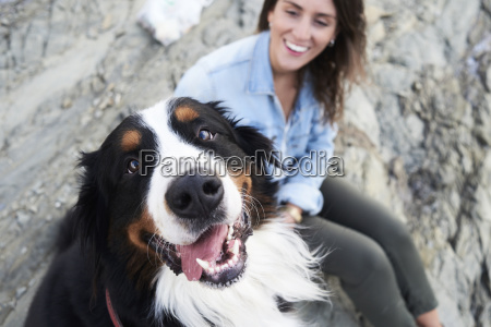 happy bernese mountain dog looking at