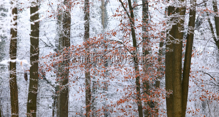 germany winter forest autumn leaves