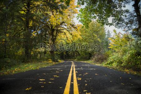 usa washington state hoh rain forest