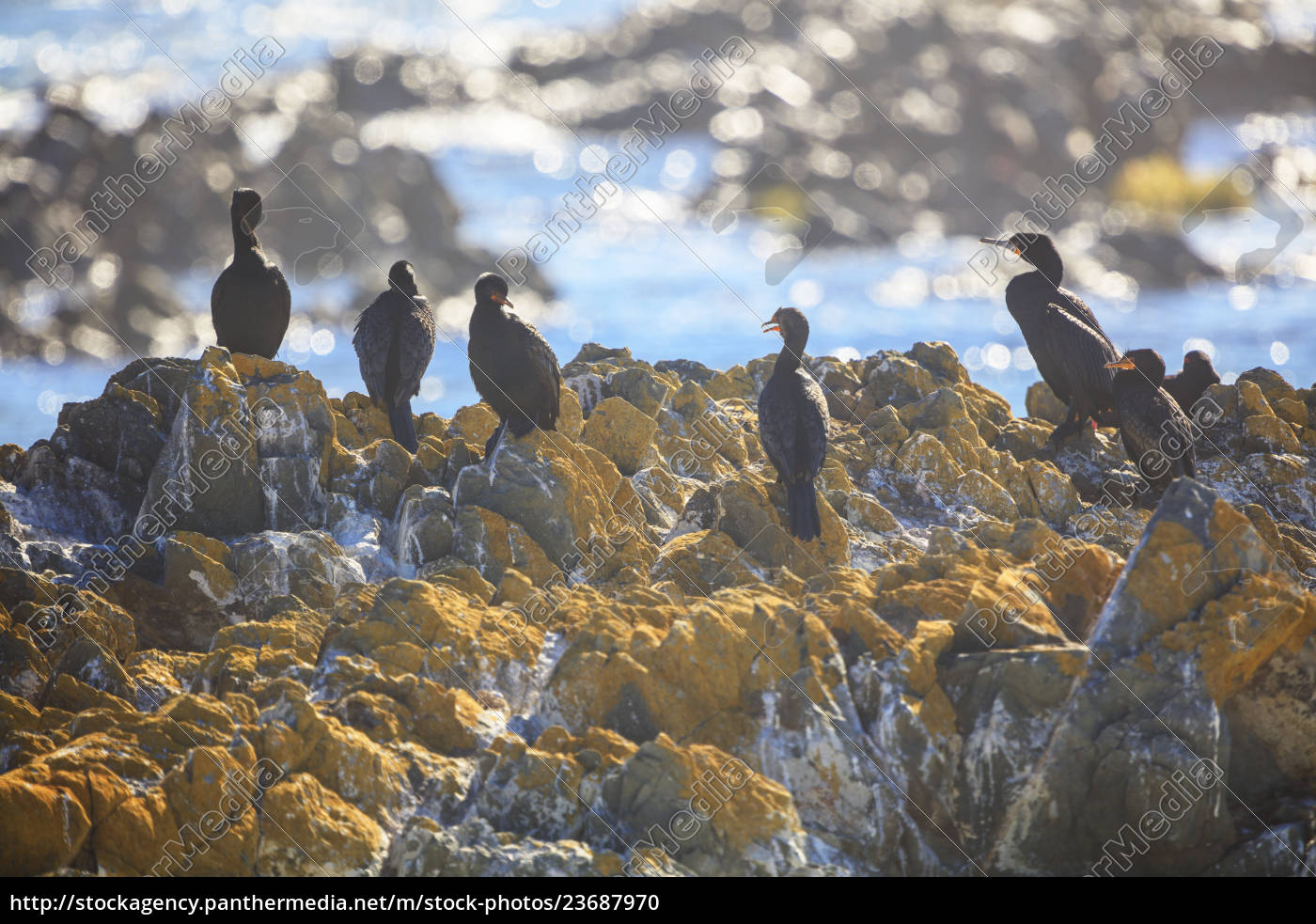 south, africa, , cape, town, , robben, island, - 23687970