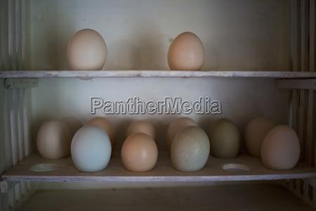 various eggs on shelf