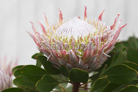 detail flower plant bloom blossom flourish