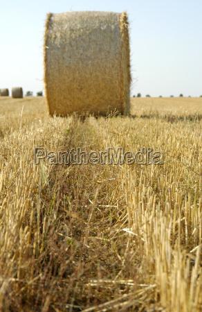 fodder agriculture field grain fields acre